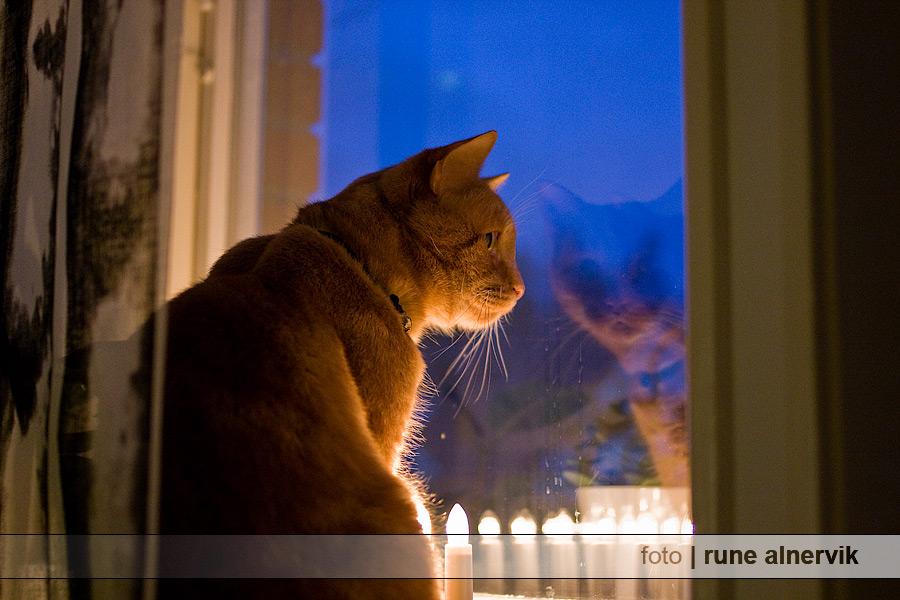 Sven firar 1a advent på sitt sätt.