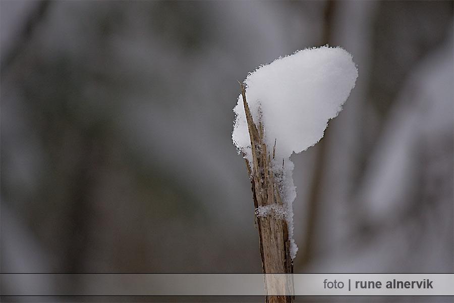Pinne toppad med snö