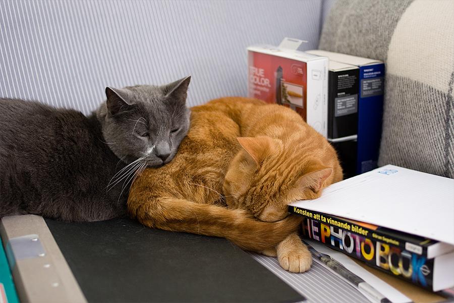 Alexis & Sven bland mitt studiematerial