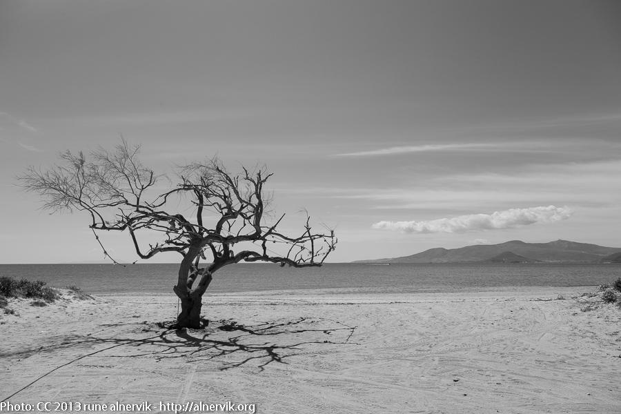 Tree Agia Anna
