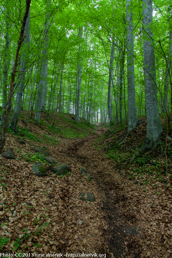 Uphill in the beech forest.
