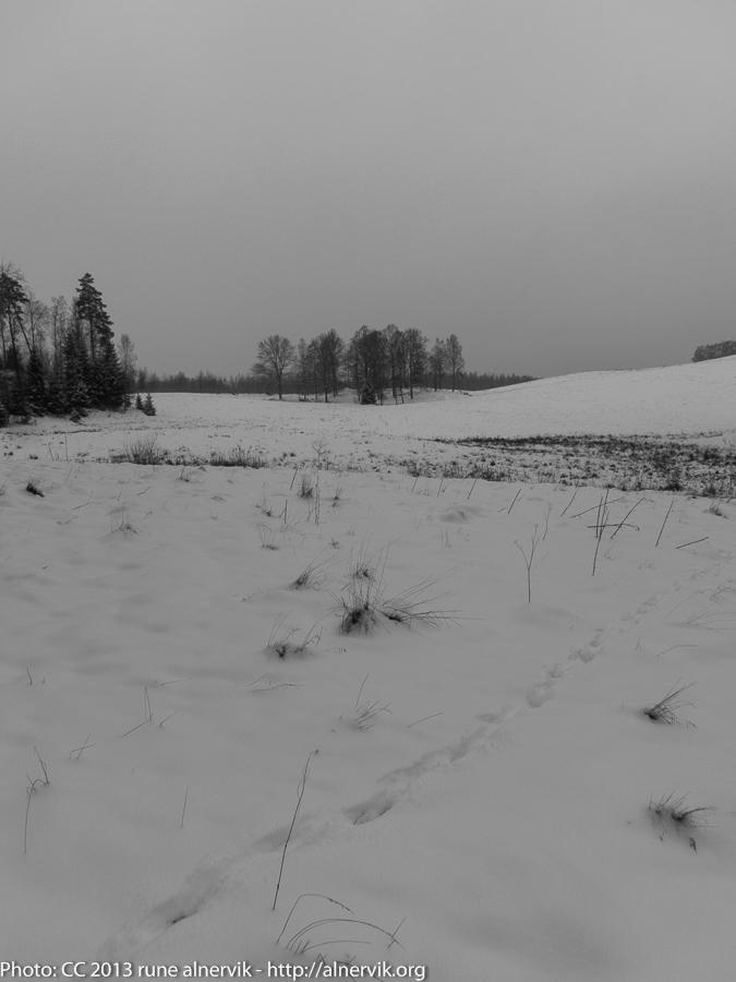 Winter landscape, skiing.